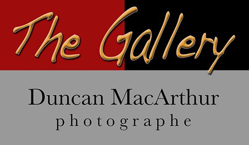 http://www.duncanmacarthur.com/datas/logos/logo.jpg